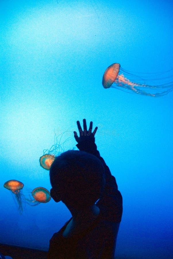 Free Georgia Aquarium Stock Photos - 4055403