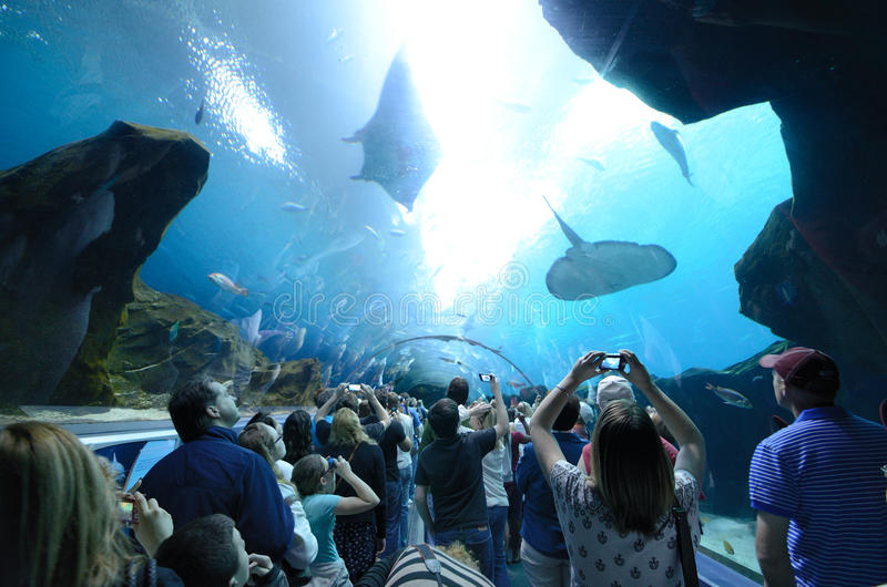 Georgia Aquarium Tunnel royalty free stock photos