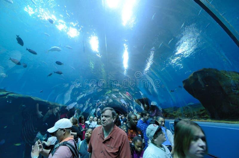 Georgia Aquarium Tunnel stock photo