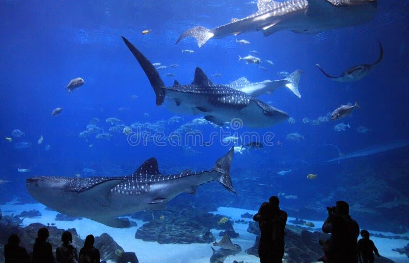 Georgia Aquarium, USA stock photos