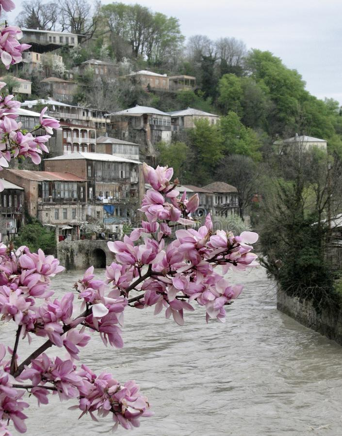 Fresh spring blossoms hanging over a river in Georgia. Georgia, a country at the intersection of Europe and Asia, is a former Soviet republic that's home stock image