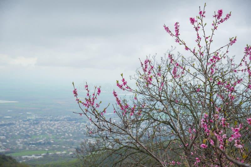 View of the Alazani valley, Georgia. Georgia`s easternmost region of Kakheti. View of the Alazani valley royalty free stock image
