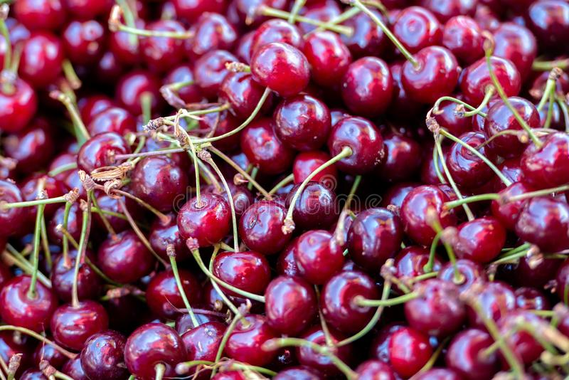 Georgia, Tbilisi, The central city market. Freshly harvested cherries.  royalty free stock photo