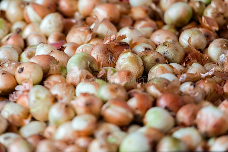 Georgia, Tbilisi, The central city market. Freshly harvested onions.  stock images