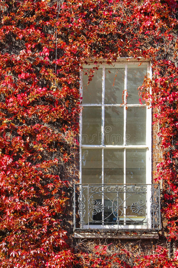 Georgian window surrounded by ivy. Dublin. Ireland stock photography