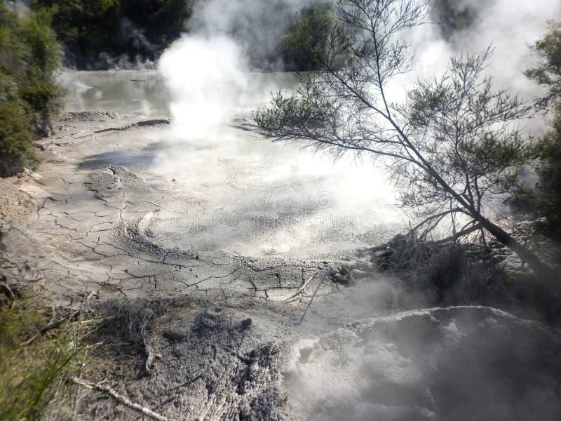 Geotermiczny Borowinowy basen Rotorua, Nowa Zelandia obraz royalty free