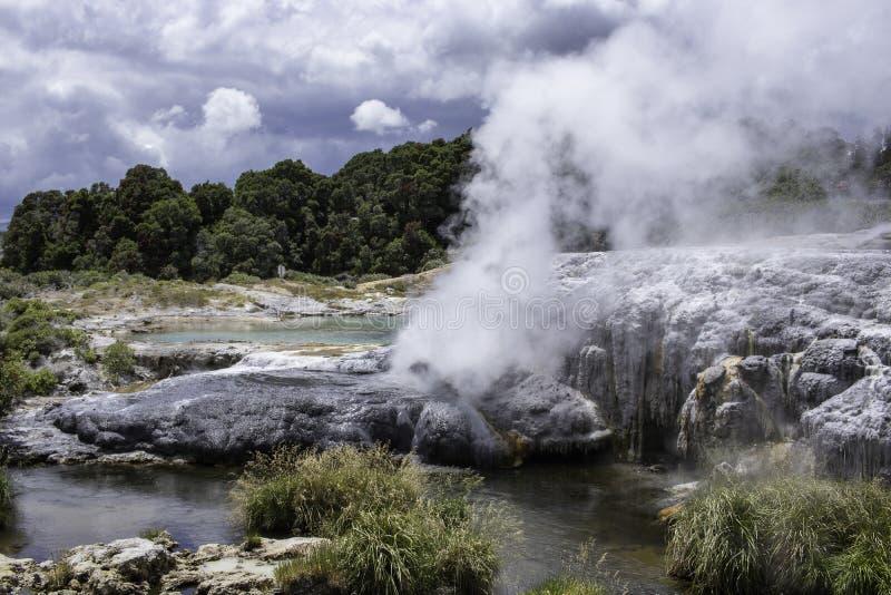 Geotermisk varm vår rotorua för Te puiageyser royaltyfria foton