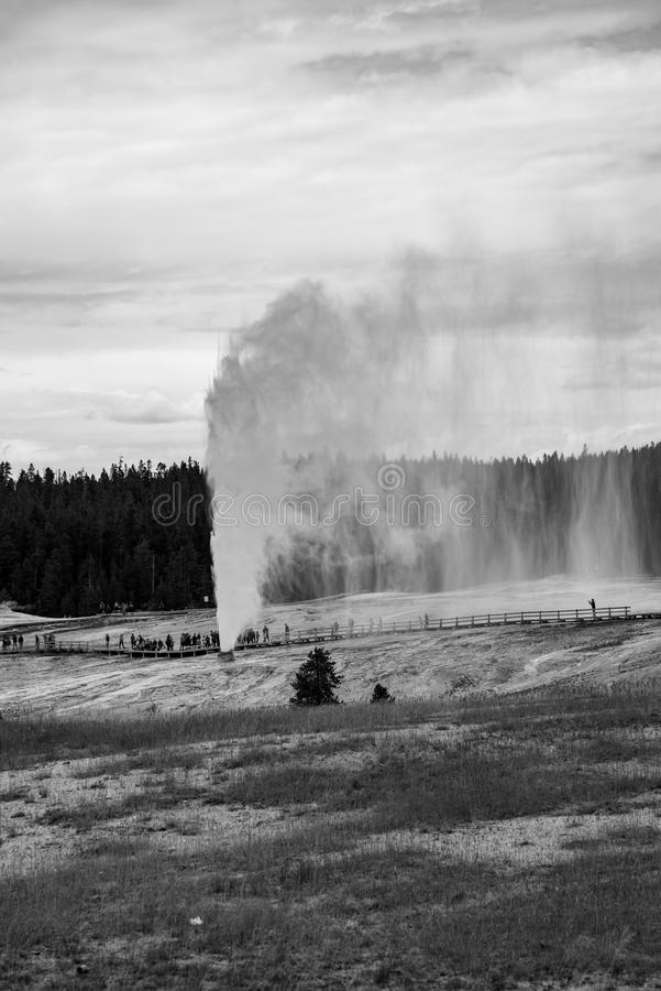 Geothermal feature at old faithful area at Yellowstone National Park (USA royalty free stock photos