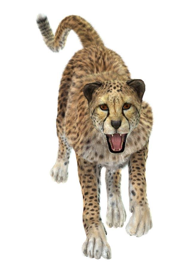 gepard ilustracji