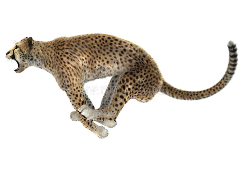 gepard ilustracja wektor