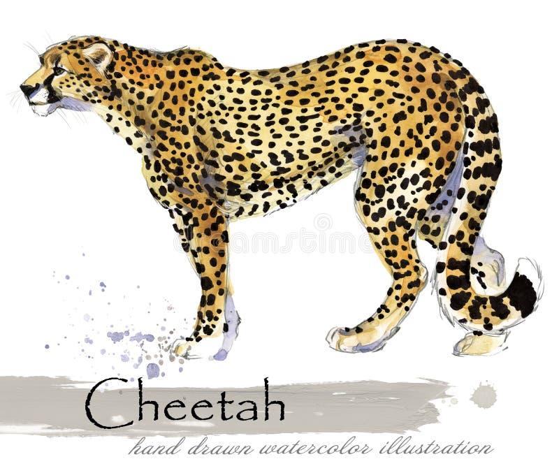 Gepard akwareli ręka rysująca ilustracja ilustracji
