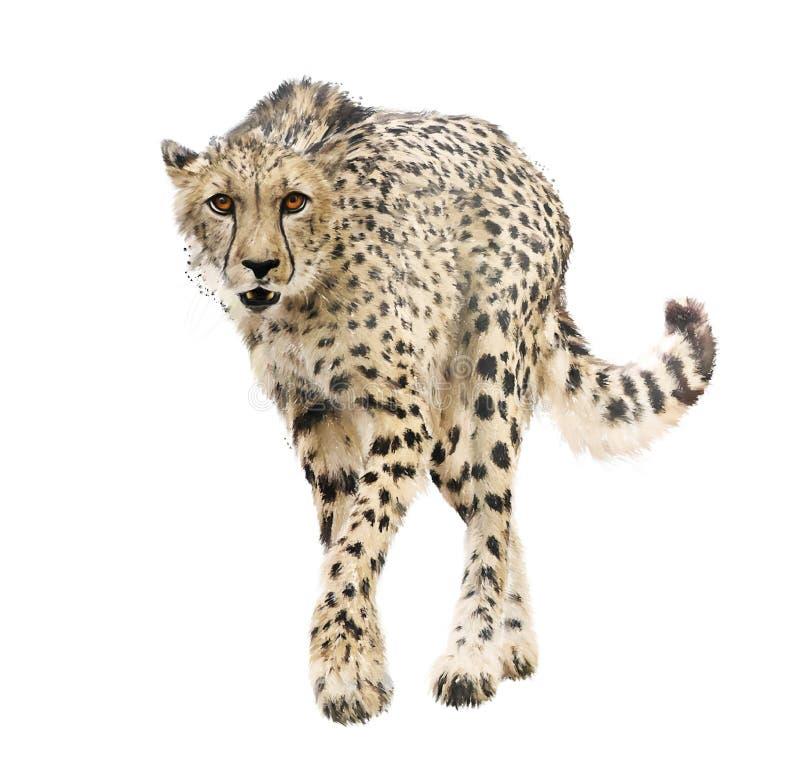 Gepard-Porträtaquarell auf weißem Hintergrund stockfotografie