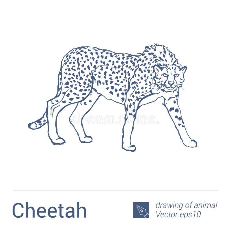 Gepard, rysować zwierzęta, vectore royalty ilustracja