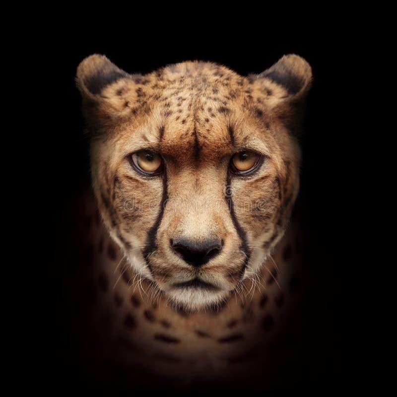 Gepard twarz odizolowywająca na czarnym tle obrazy stock