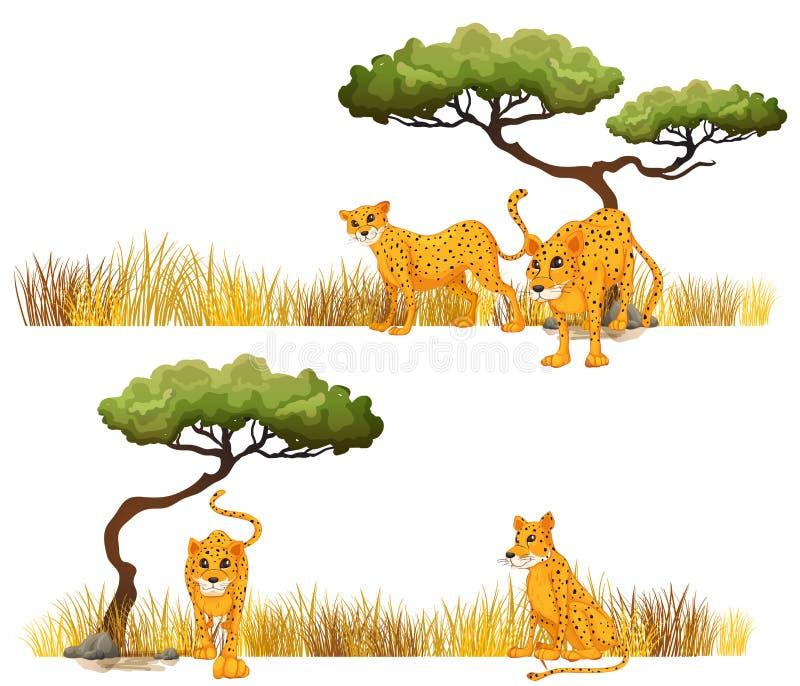 Gepard w polu ilustracji