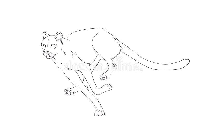 Geparda bieg, rysuje linie, wektor ilustracji