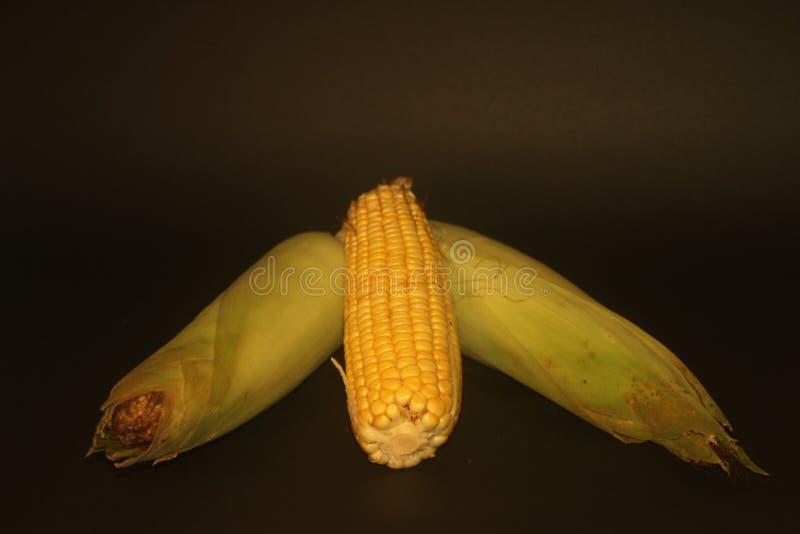 Gepelde maïskolf Één, Ruwe Twee stock afbeelding