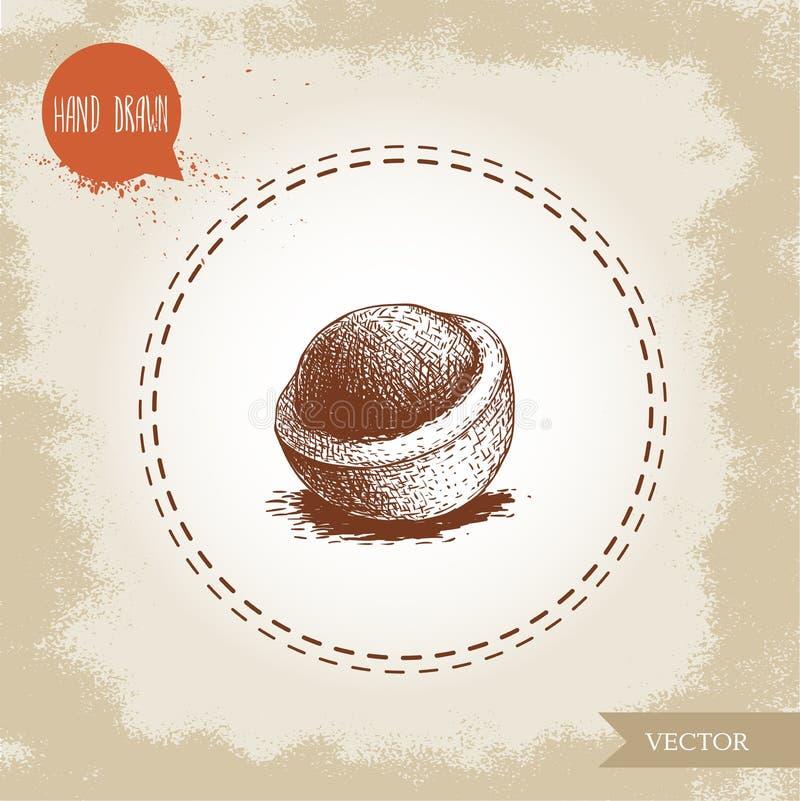 Gepelde macadamia nootshell r Botanische tekening australië vector illustratie