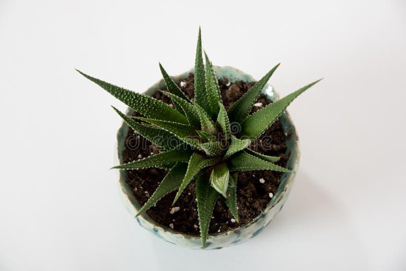 Gepflanzter Succulent stockbilder