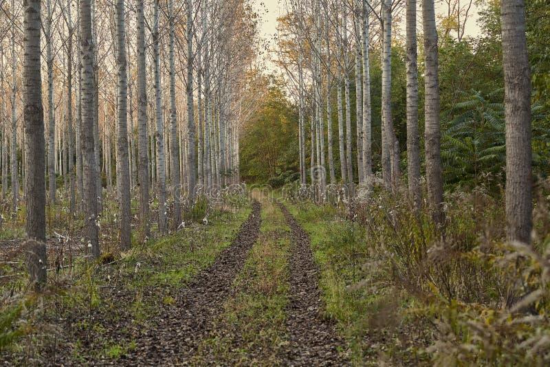 Gepflanzter Wald im Herbst stockfotos