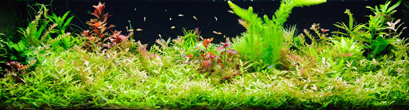 Gepflanztes Aquarium lizenzfreie stockbilder