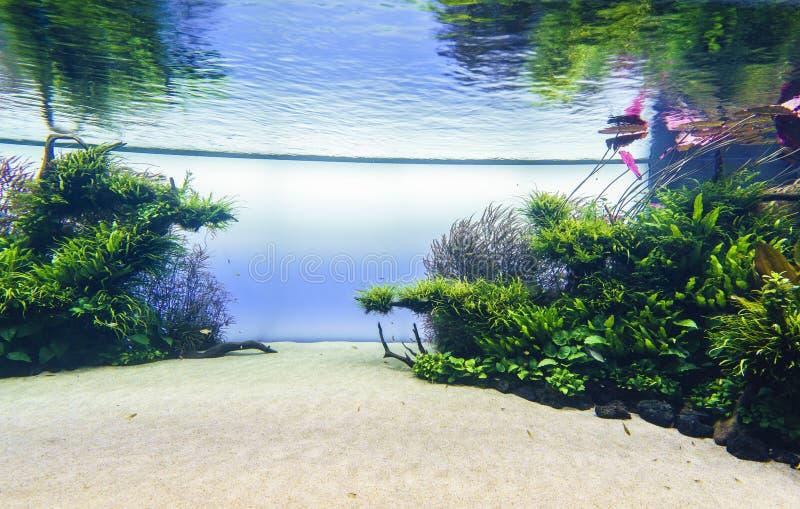 Gepflanztes Aquarium stockfoto