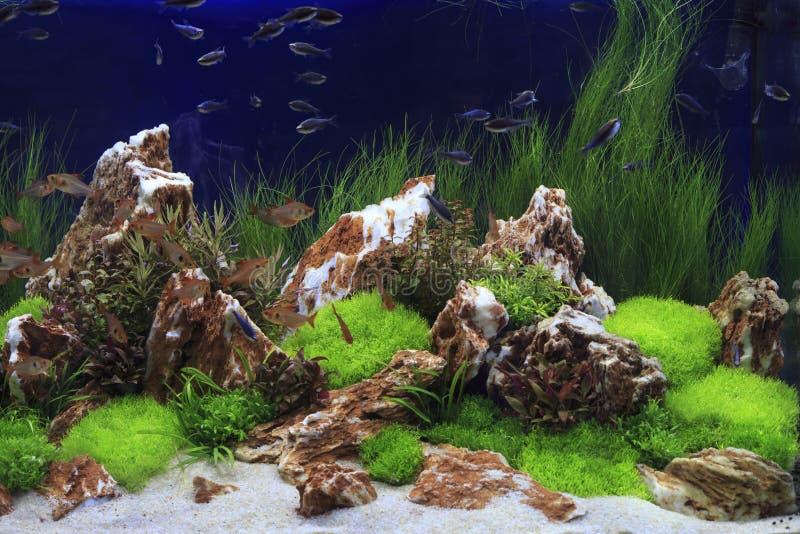 Gepflanztes Frischwasseraquarium lizenzfreie stockfotos