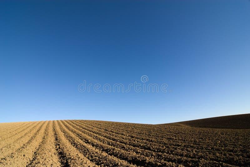 Gepflogener blauer Himmel des Feldes lizenzfreies stockfoto