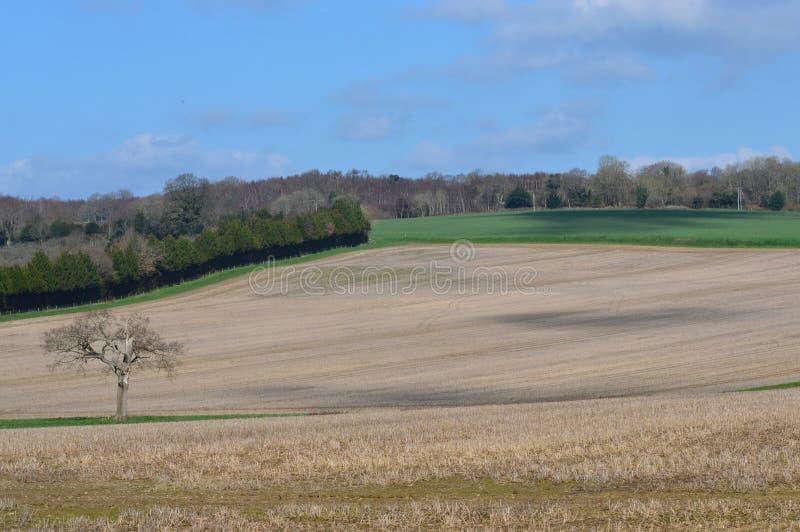 Gepflogenes Erntefeld in ländlichem England stockbild