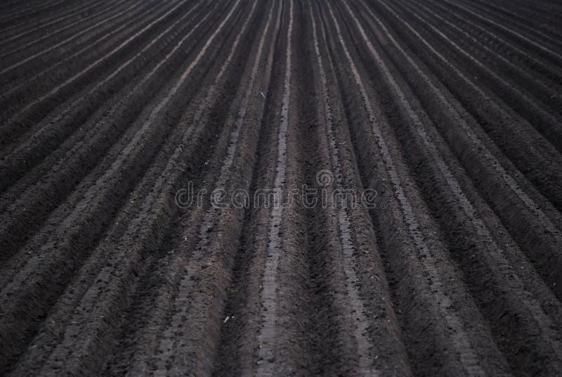 Gepflogenes Feld stockfotografie