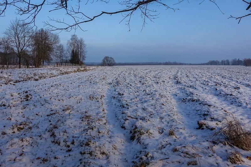 Gepflogenes Feld und sichtbare Traktorspuren, stockbild