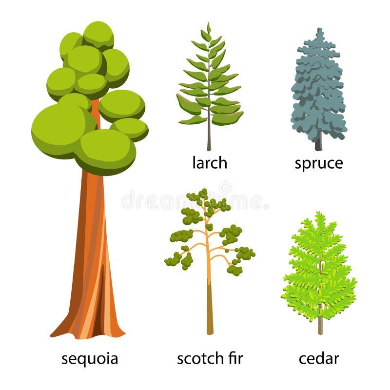 Geplaatst boompictogram - de illustratie van het Naaldbomenbeeldverhaal Vlakke Naaldbomeninzameling: grote sequoia, sparren, lari stock illustratie