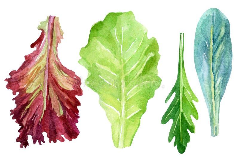 Geplaatst waterverf verse greens royalty-vrije illustratie