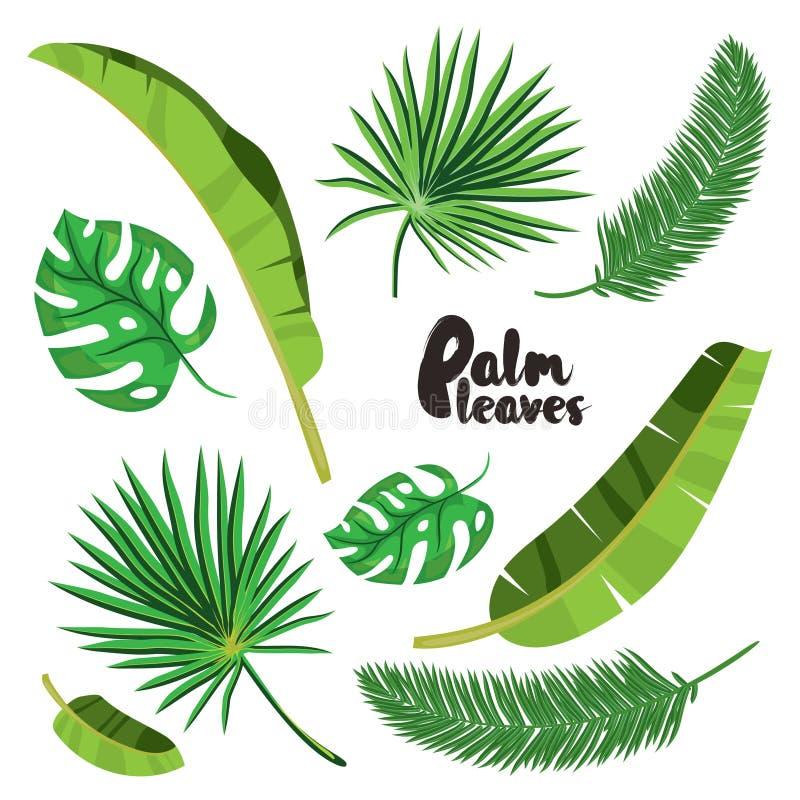 Geplaatste beeldverhaal tropische palmbladen Vector die op witte achtergrond wordt geïllustreerd Vlakke vectorhand getrokken palm stock illustratie