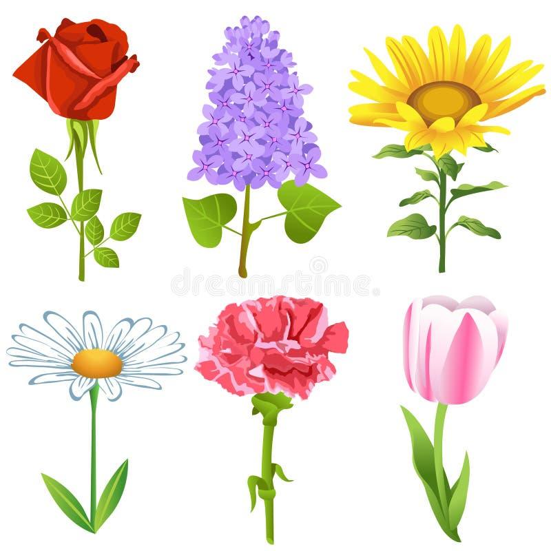 Geplaatste bloemen
