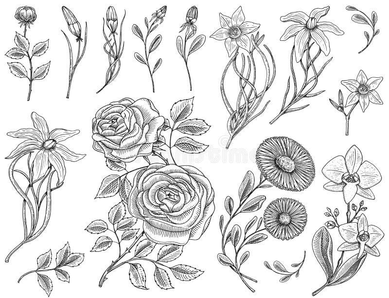Geplaatste bloemen, rozen met bladeren en knoppen, kruid geneeskrachtige kamille, gele narcis en orchidee, lelie Huwelijks botani vector illustratie