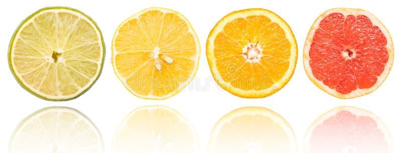 Geplaatste citrusvruchtenplakken royalty-vrije stock afbeeldingen