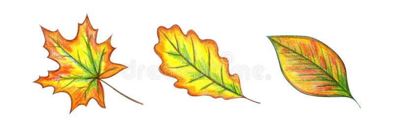 Geplaatste de Bladeren van de herfst vector illustratie