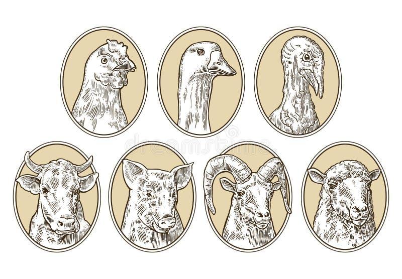 Geplaatste de dieren van het landbouwbedrijf Varken, koe, schapen, kip, gans, de hoofden van Turkije royalty-vrije illustratie