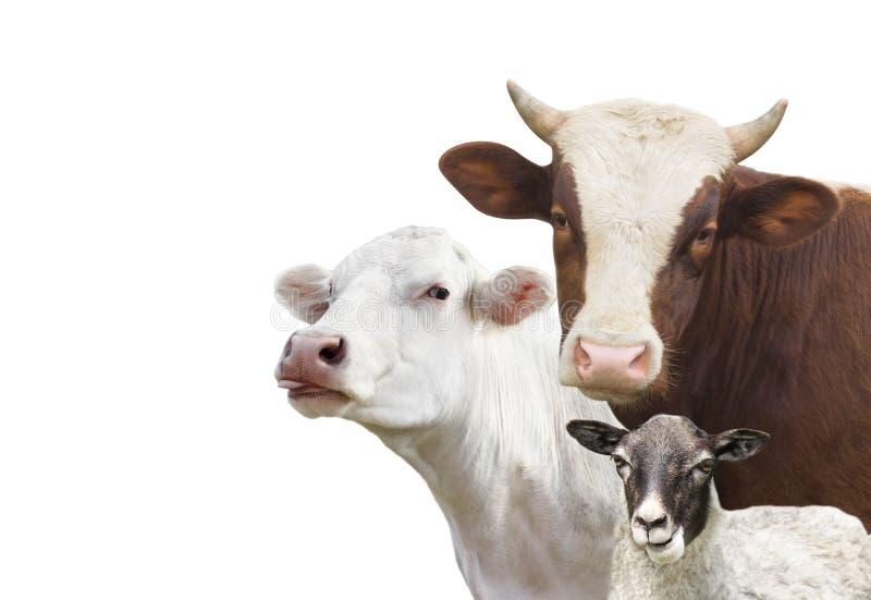 Geplaatste de dieren van het veelandbouwbedrijf stock foto