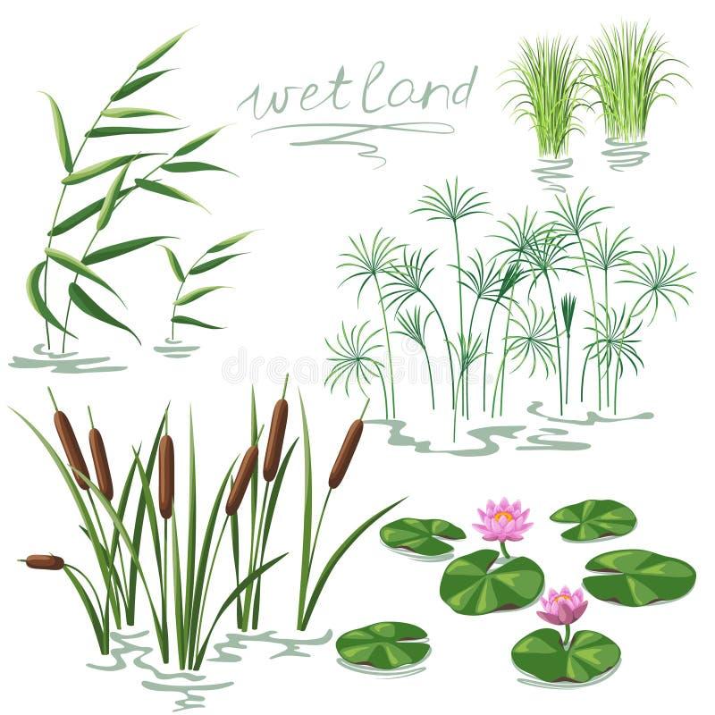 Geplaatste de Installaties van het moerasland stock illustratie