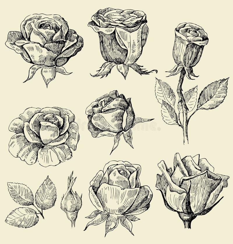 Geplaatste de krabbels van rozen stock illustratie