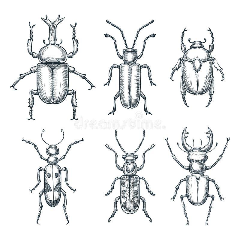 Geplaatste insecten en kevers Vectorschetshand getrokken illustratie Insecteninzameling op witte achtergrond wordt geïsoleerd die vector illustratie