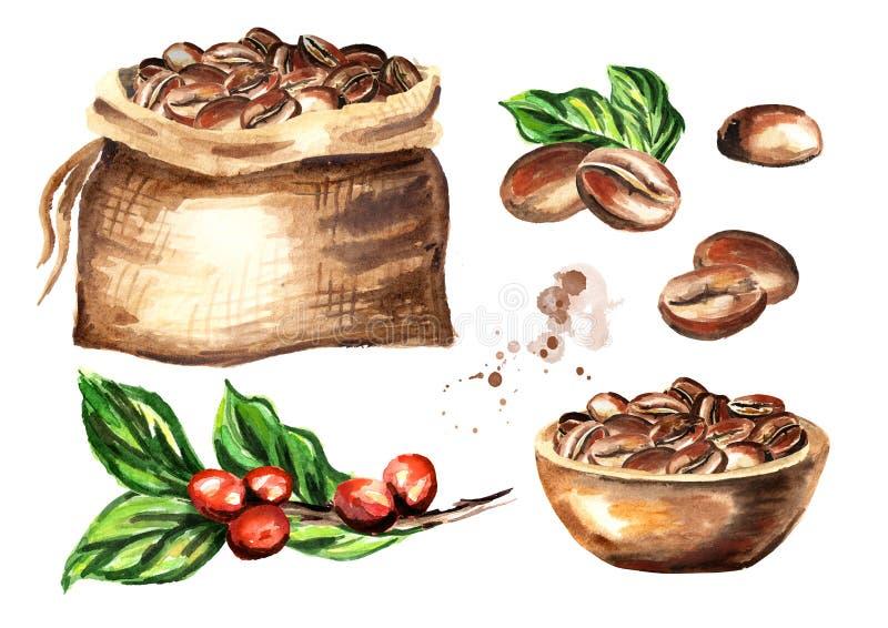 Geplaatste koffiebonen Waterverfhand getrokken die illustratie op witte achtergrond wordt geïsoleerd stock illustratie