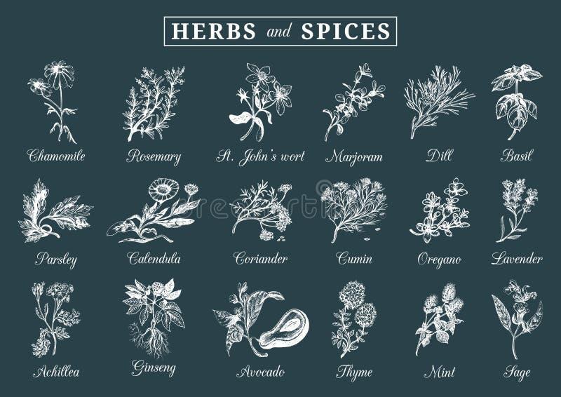 Geplaatste kruiden en kruiden Hand getrokken officinalis, geneeskrachtige, kosmetische installaties Botanische illustraties voor  royalty-vrije illustratie