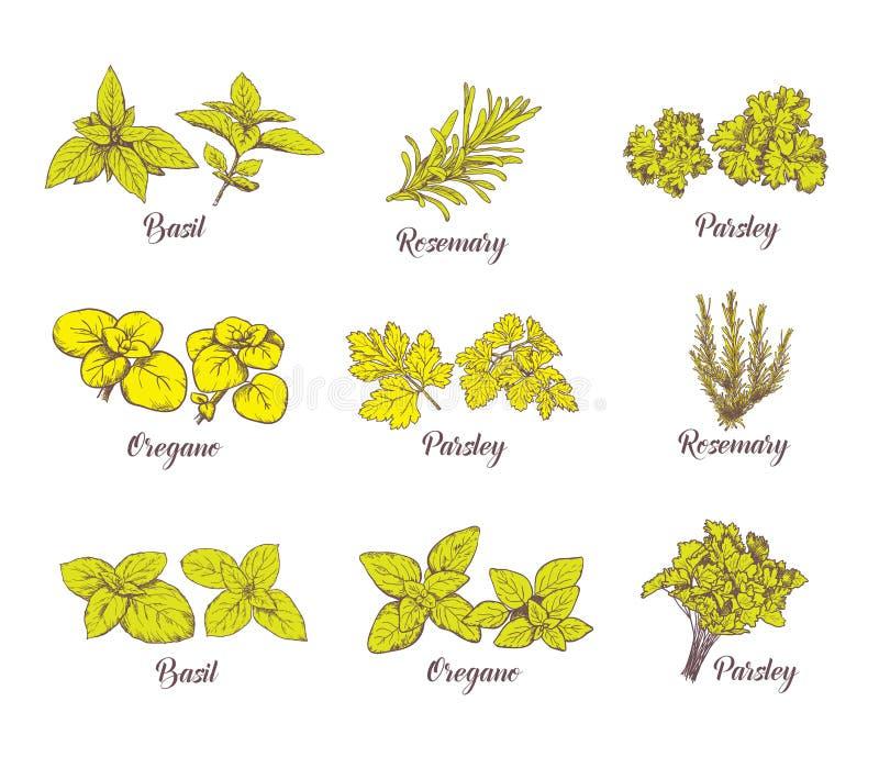 Geplaatste kruiden en kruiden Vectorschetsen voor etiketten stock illustratie