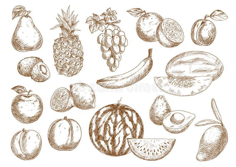 Geplaatste landbouwbedrijfvruchten geïsoleerde schetsen stock illustratie