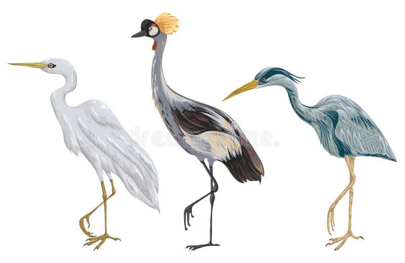 Geplaatste reigervogels Marsh Fauna Witte achtergrond royalty-vrije illustratie