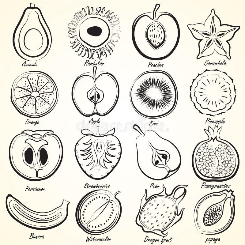 Geplaatste vruchten stock illustratie
