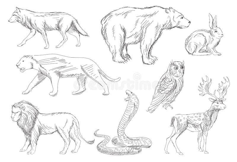 Geplaatste wilde dieren stock illustratie